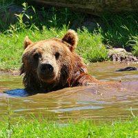 bear-1580037_1920 (2)